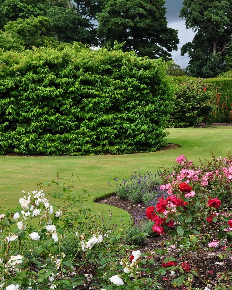 Gardener in cannock m s gardening services for General garden services